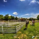 HDR-夏の牧場