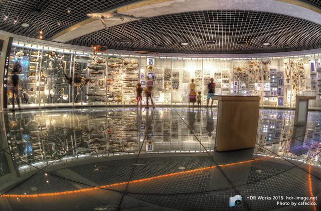 HDR科学博物館