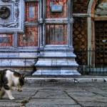 Topaz Adjust - 猫